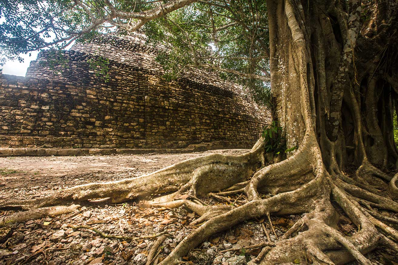 tree roots in an archeological site - Road trip from Bacalar to Celestun