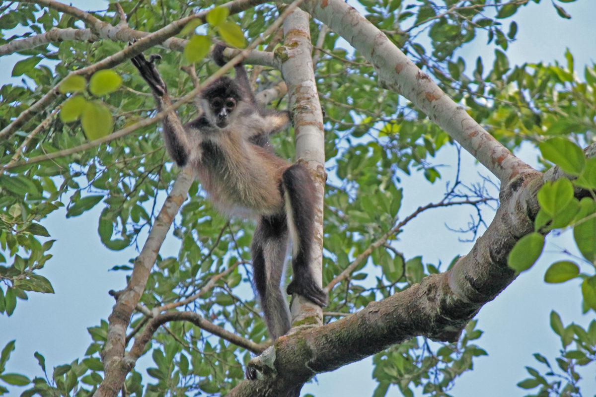 Monkeys Time Travel Scene