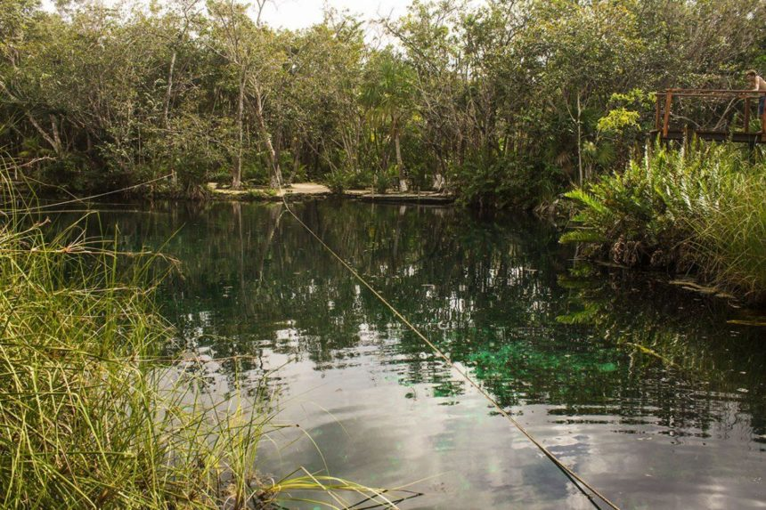 emerald lake surrounded by a tropical vegetation