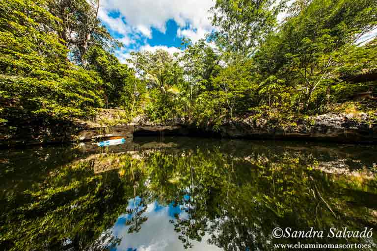 reflection on a lake surrounded by vegetation