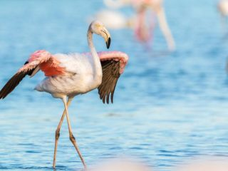 Where to see Flamingos in Latin America