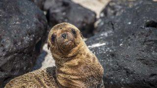 Galapagos Travel Itineraries Galapagos islands Vacations - Boundless Roads