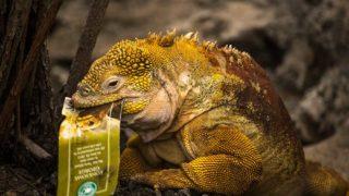 Galapagos travel itinerary Galapagos islands Vacations - Boundless Roads