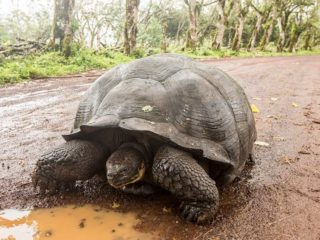 one year on the road Galapagos islands Vacations - Boundless Roads