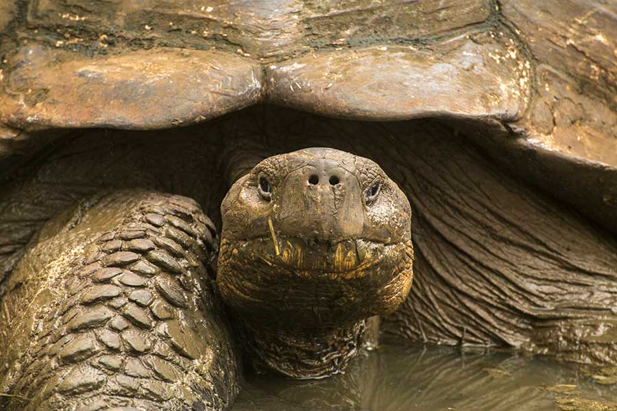 Galapagos travel Itineraries - Boundless Roads