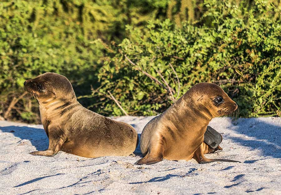 Galapagos islands Vacations - Boundless Roads - Animals of the Galapagos Islands