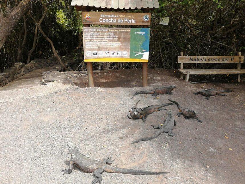Isabela Island travel guide