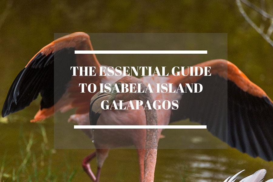 https://www.boundlessroads.com/how-to-make-the-most-of-your-trip-to-isabela-island-galapagos/
