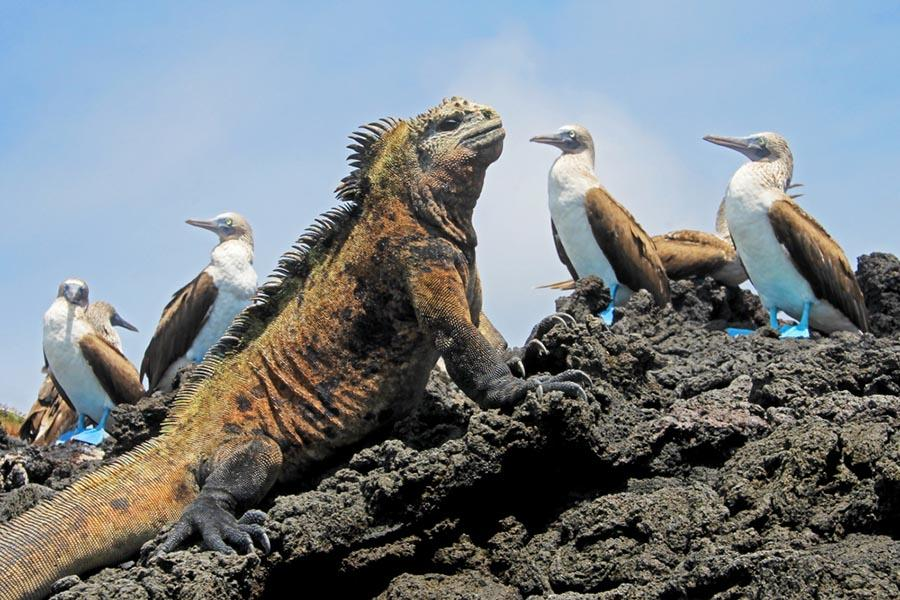 Animals of the Galapagos Islands - Boundless Roads
