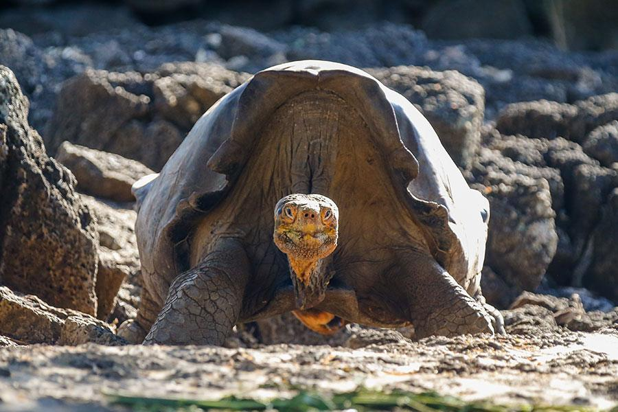The animal of the Galapagos