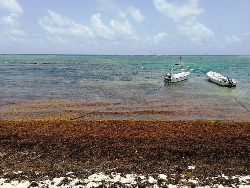 Playa casa cenote
