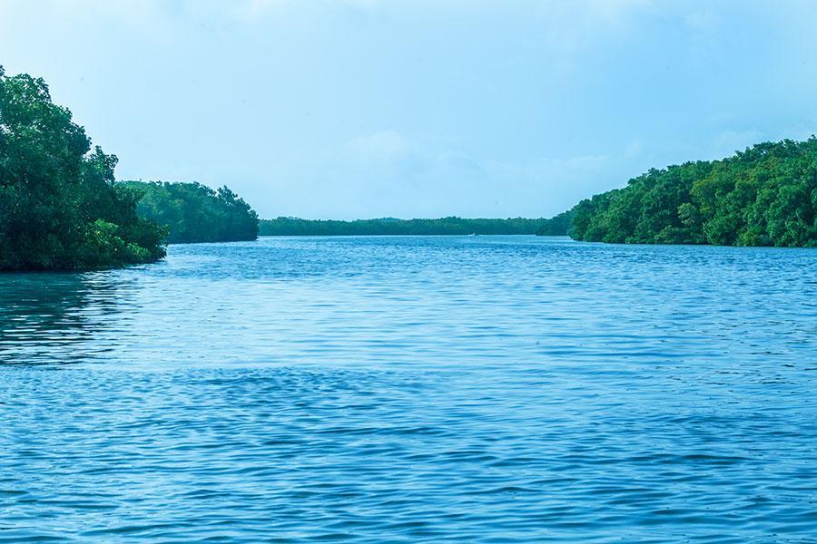 River Lagartos