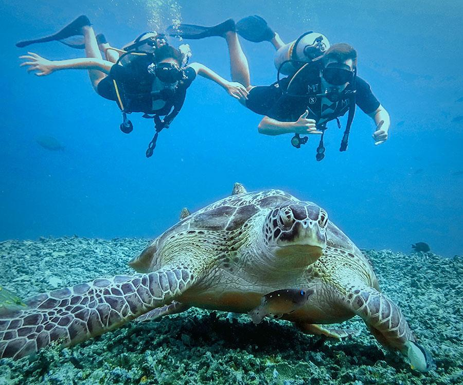 A turtle on the bottom of the ocean and two divers behind