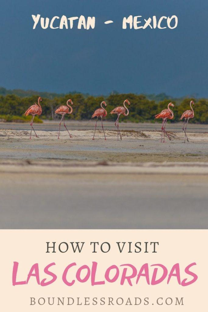 Pin of las coloradas- picture with pink flamingoes and blue lakes