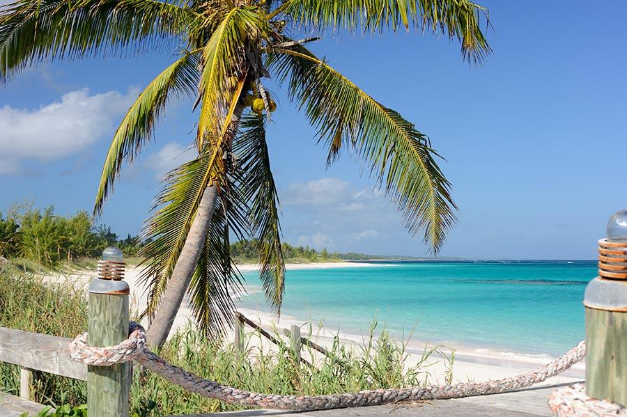 beach - a palm and turquoise water