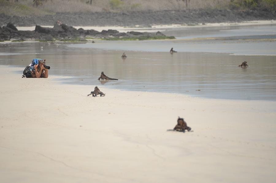 me photographing iguanas on the beach in Santa Cruz