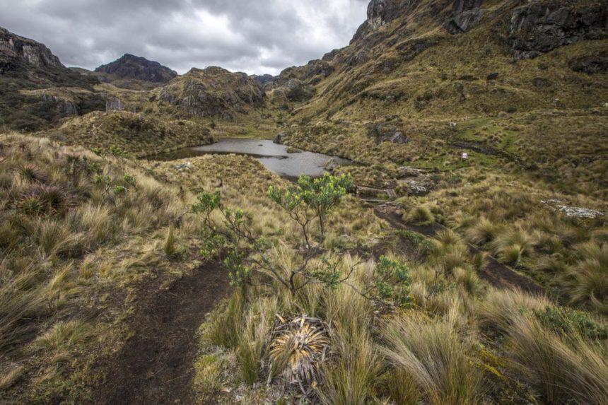 countryside in ecuador