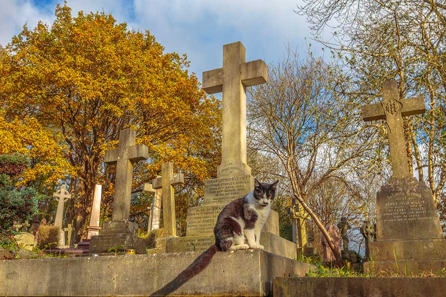 cat on a tomb in the cemetery