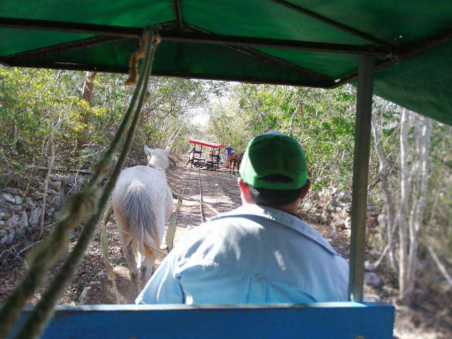cart pulled by a horse on a narrow path in the jungle