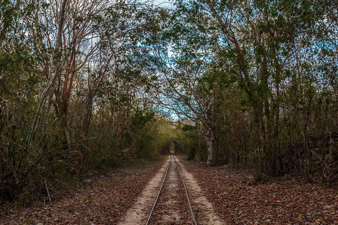 cuzama rail road in the jungle