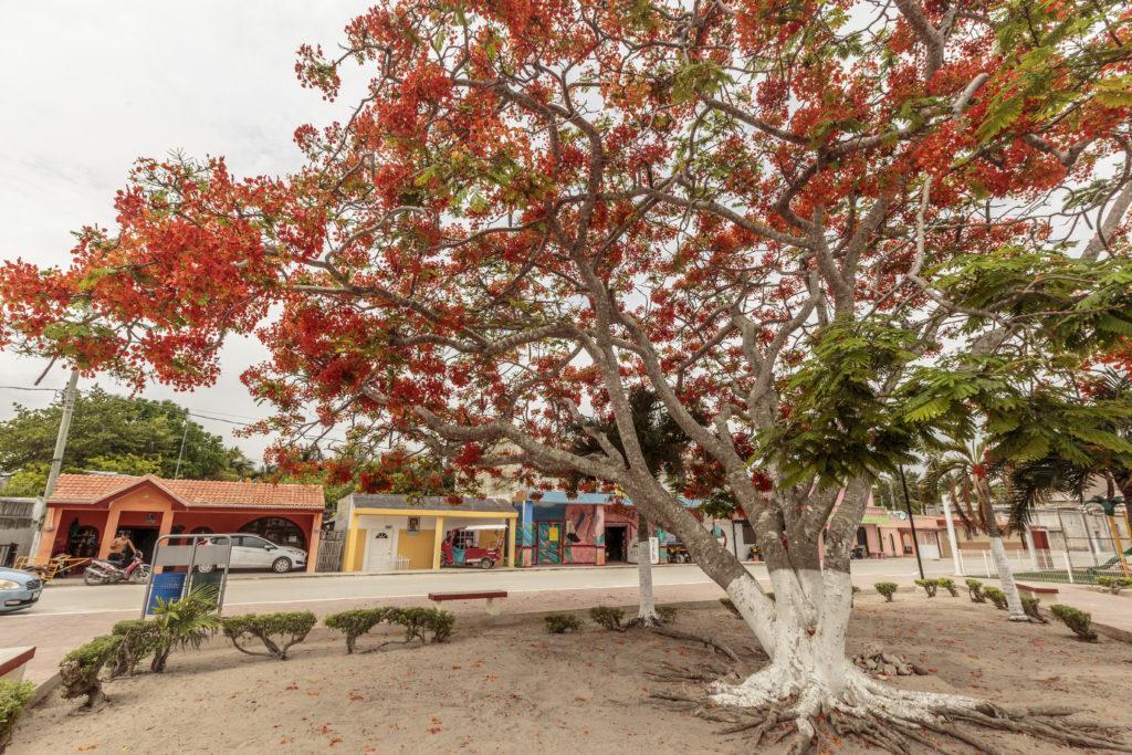 EL Cuyo Plaza