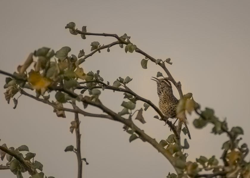 birdwatching cabo pulmo