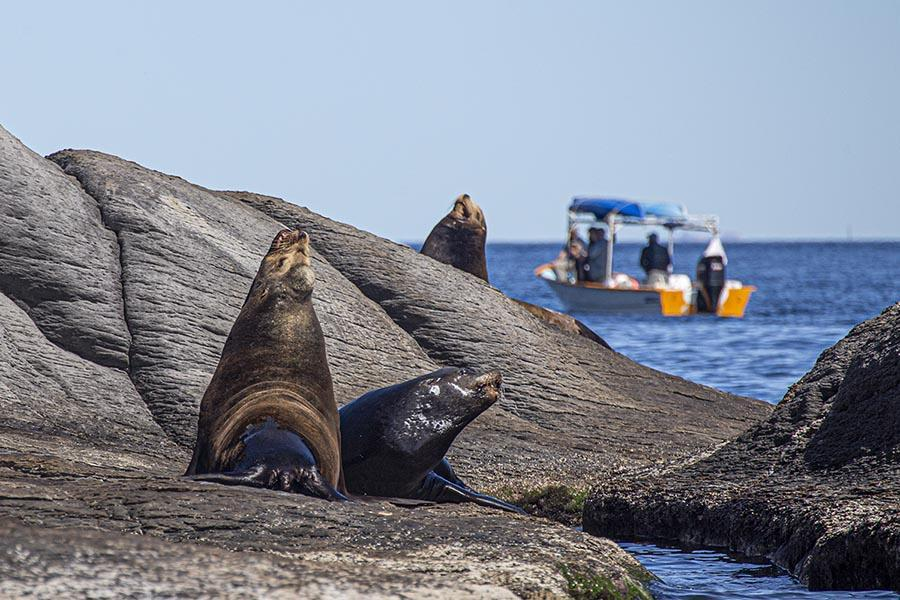 sea lions on a rock