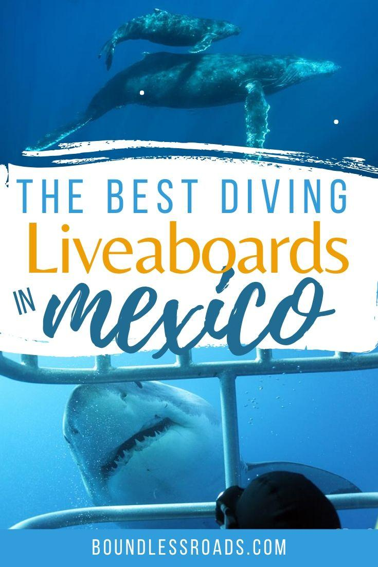 diving liveaboard in mexico