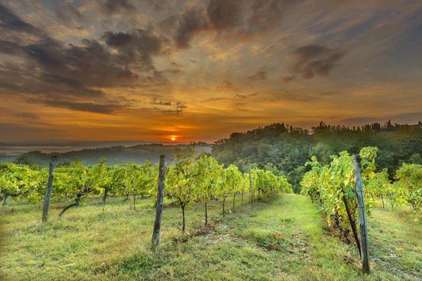 vineyard and sunrise
