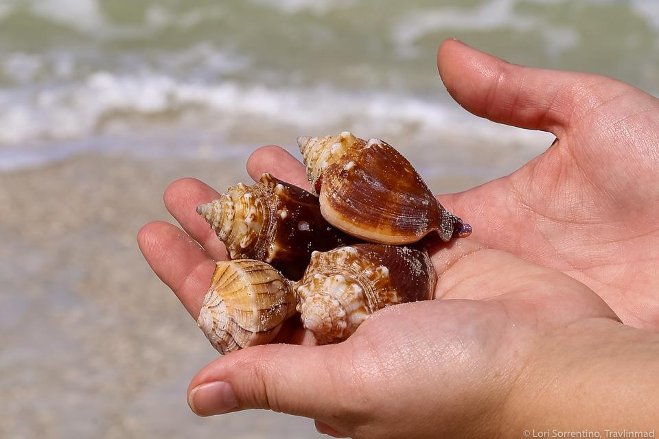 shells in hand sea in the background