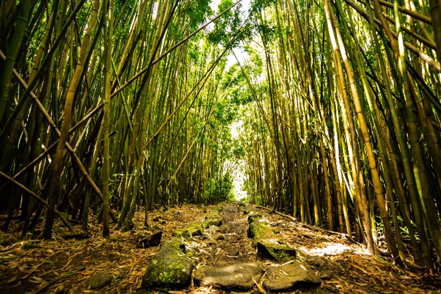 path on a bamboo forest