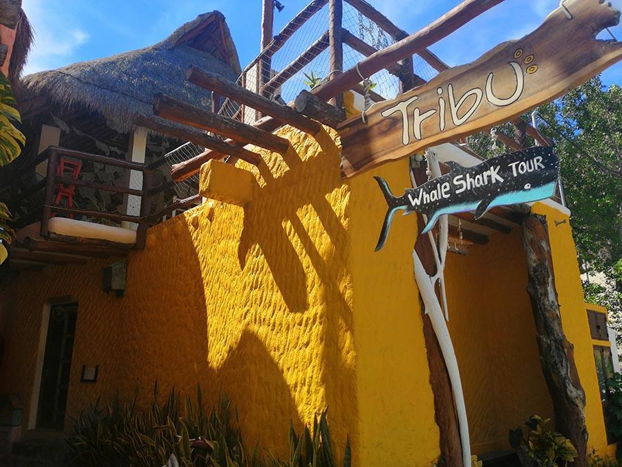 Tribu hostel front door holbox