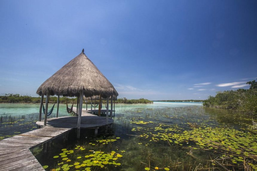 lagoon with plants floating in the water and a platform with a roof and hammocks