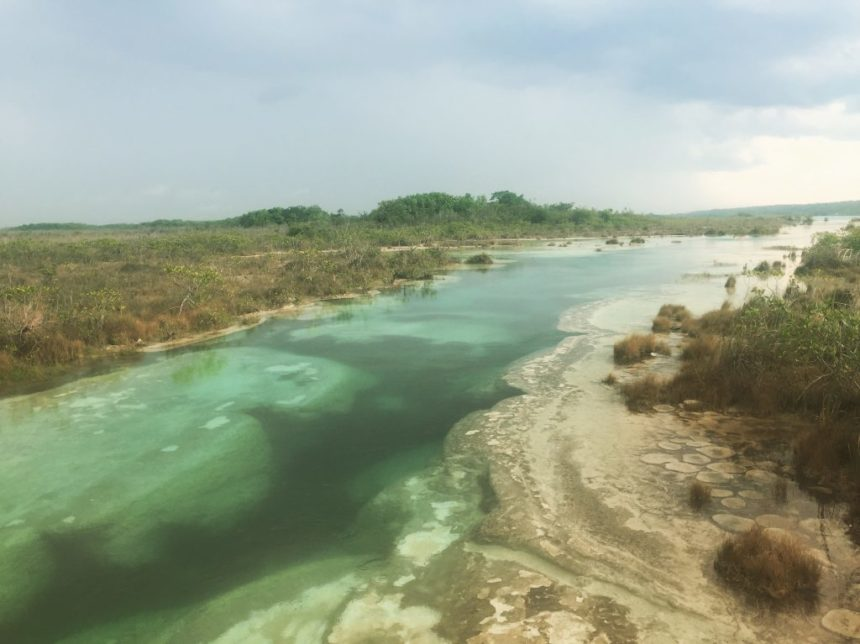 Emerald green river lined by plants