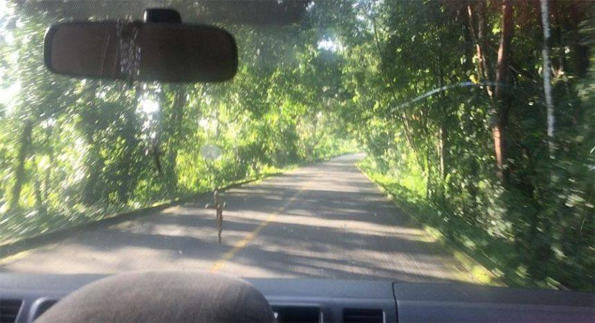 SIERRA LACANDONA ROAD with tropical vegetation