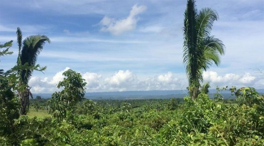 THE VIEWS FROM THE WINDOWS - lush tropical vegetation and blue and white cloudy sky