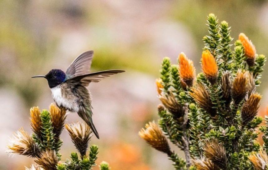 hummingird with orange flowers at the back