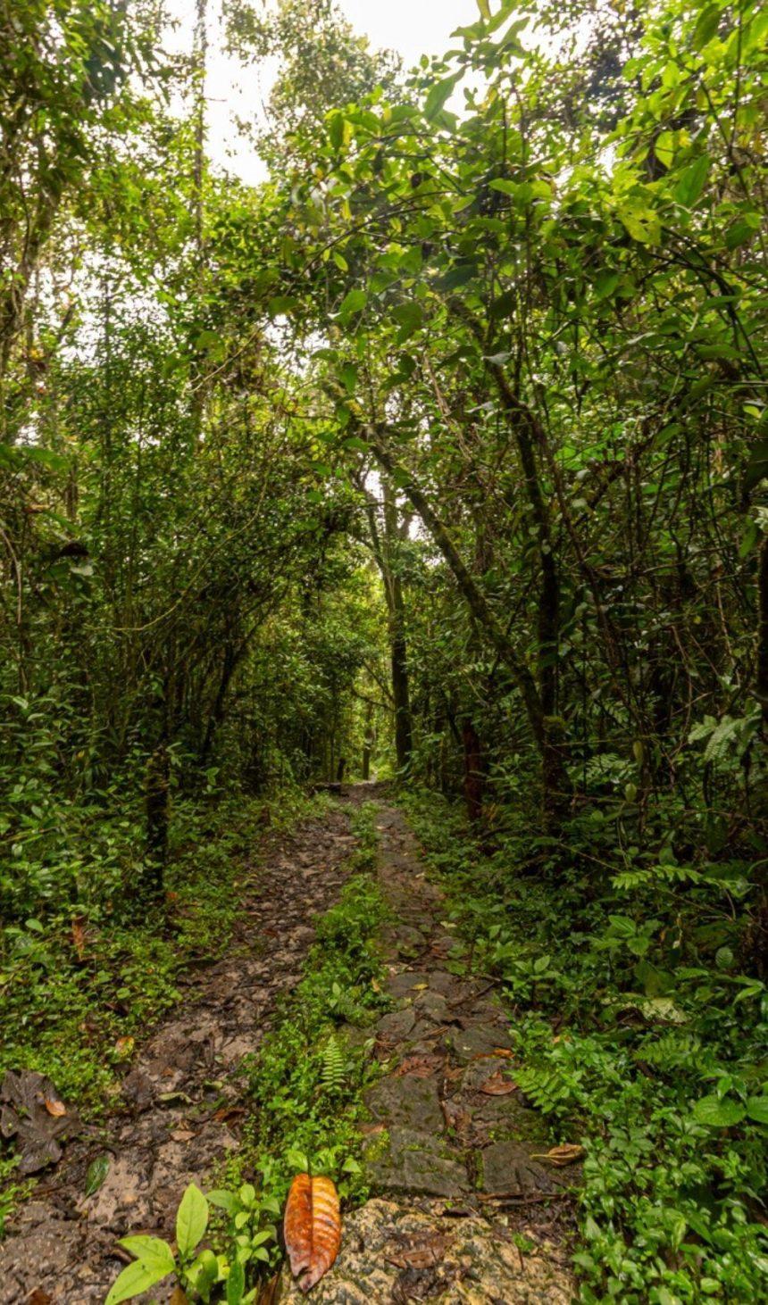 trail in the jungle