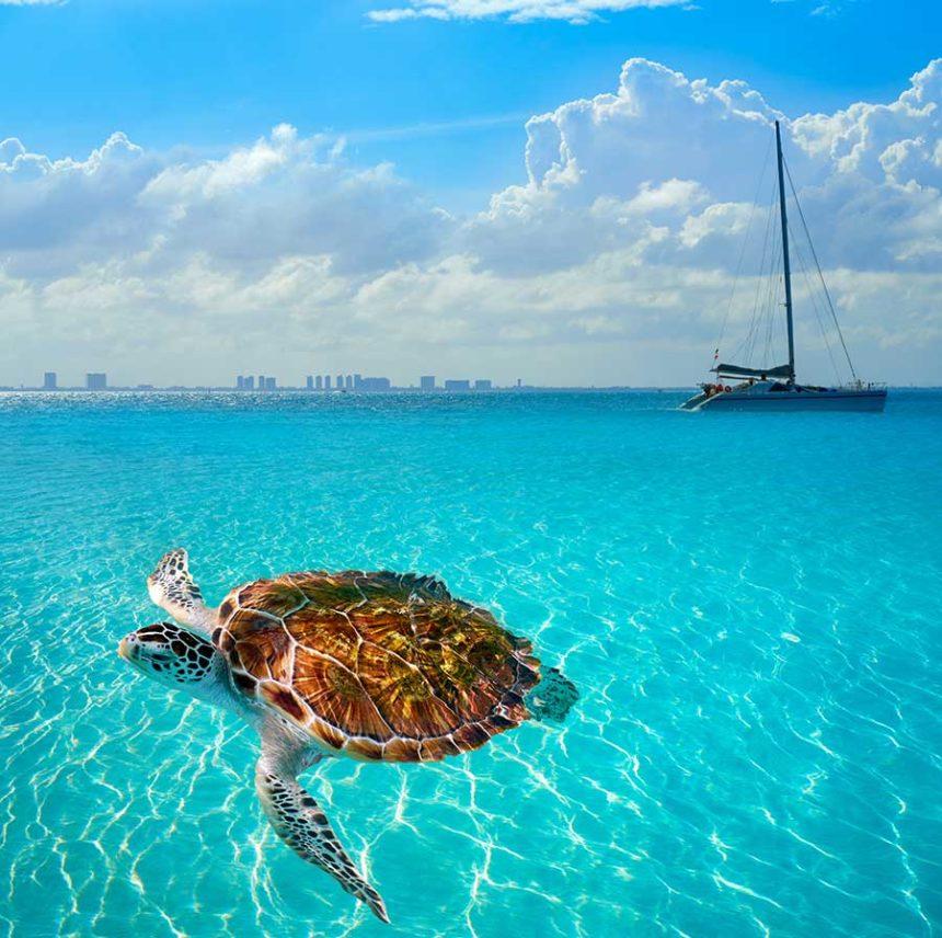 Isla Mujeres turtle and catamaran