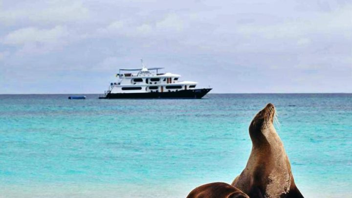 sea lion on the shore and cruise ship in the background