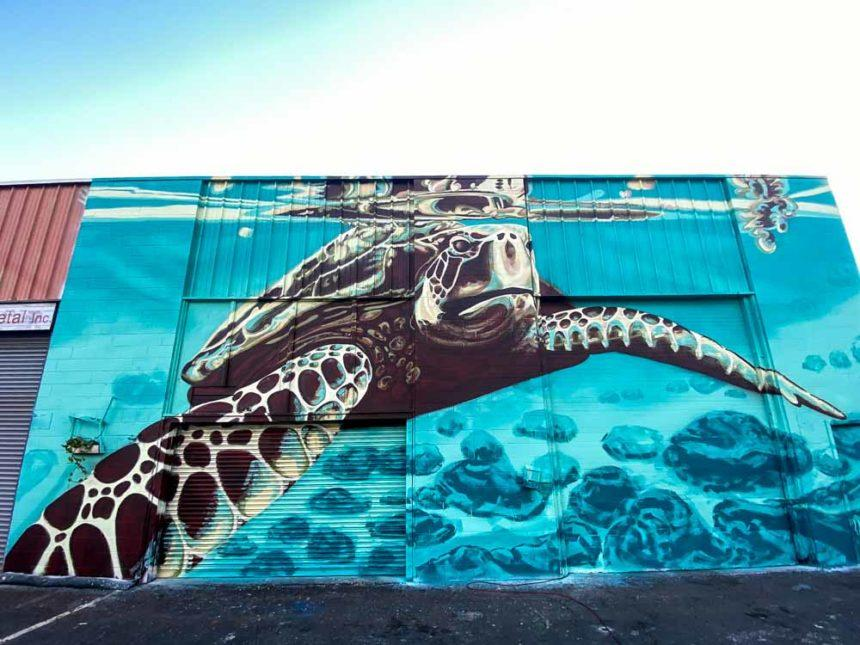 turtle painted on a wall