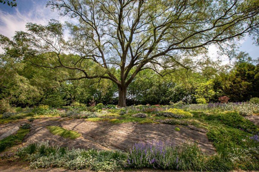 Lush garden in Tyron Park
