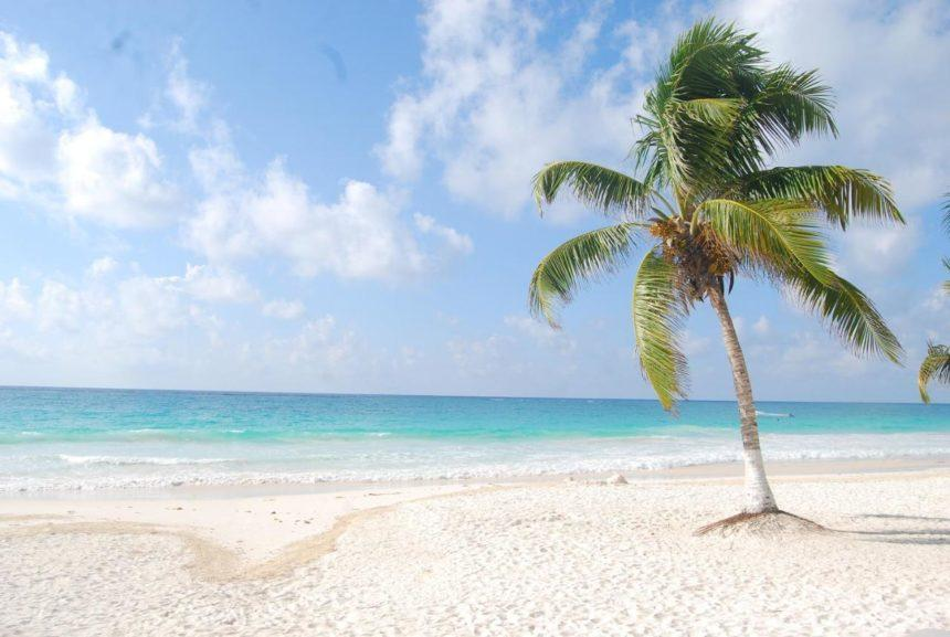 deserted beach with a palm tree
