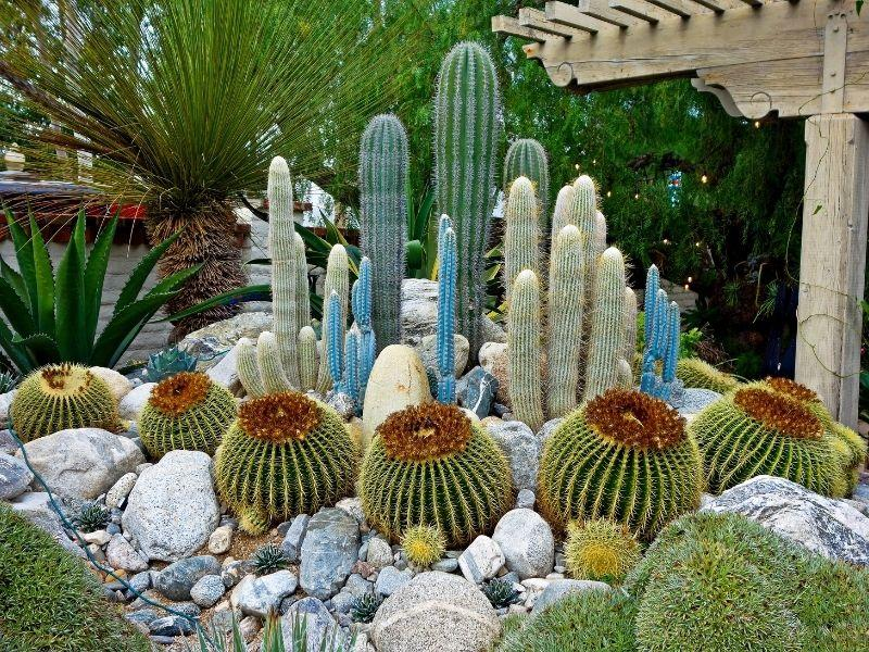 composition of cacti