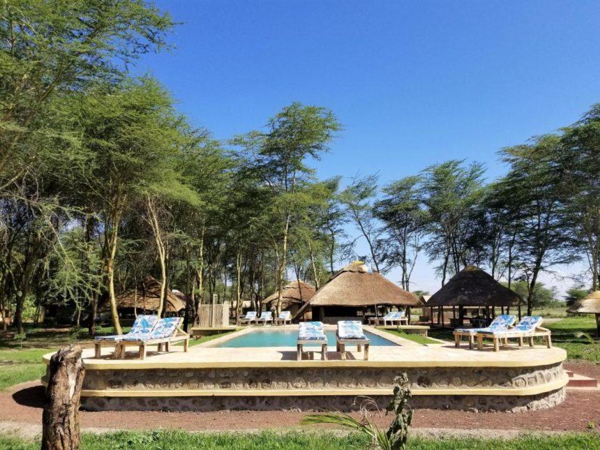 safary lake manyara pool