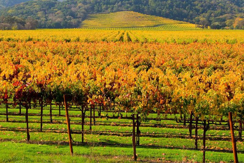 vineyard in California - best things to do in November in USA