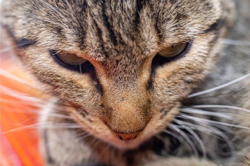 patty - the cat housesitting in Guatemala