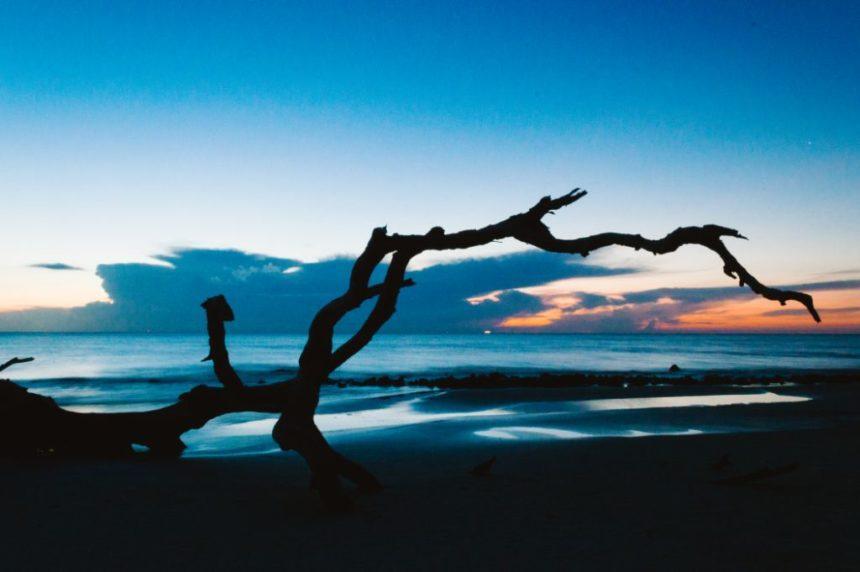 Jekyll island Driftood beach