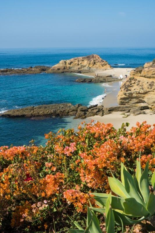 LAGUNA BEACH SURROUNDED BY FLOWERS