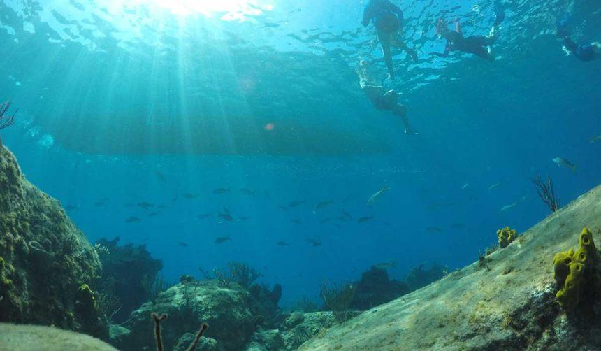 snorkeling in the eco tour